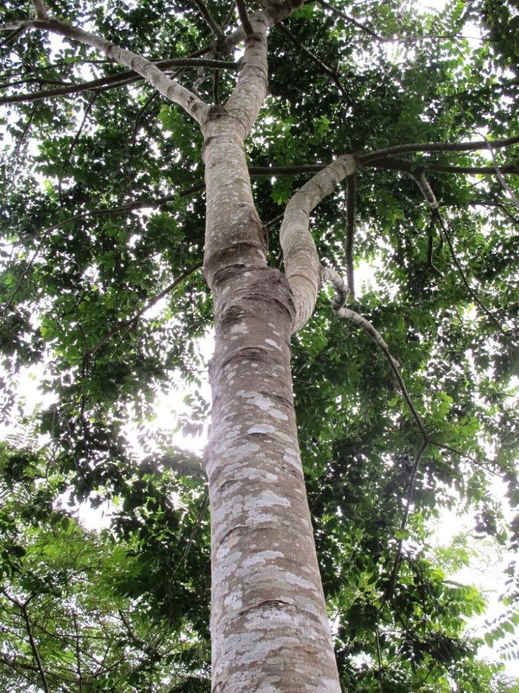 ความหมายของต้นไม้